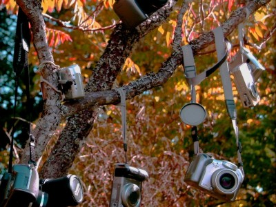 Vintage cameras hanging from a tree.